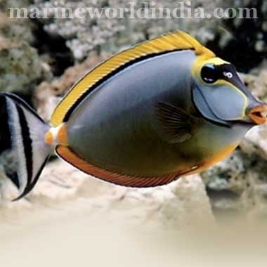 Importer of marine fish supplies of Tropical Fish, freshwater fish ...