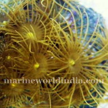 Bright Yellow Polyp Rock