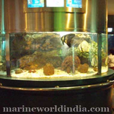 Importer Of Marine Fish Supplies Of Tropical Fish Freshwater Fish